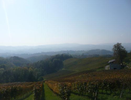 Weinwanderung in der Steiermark
